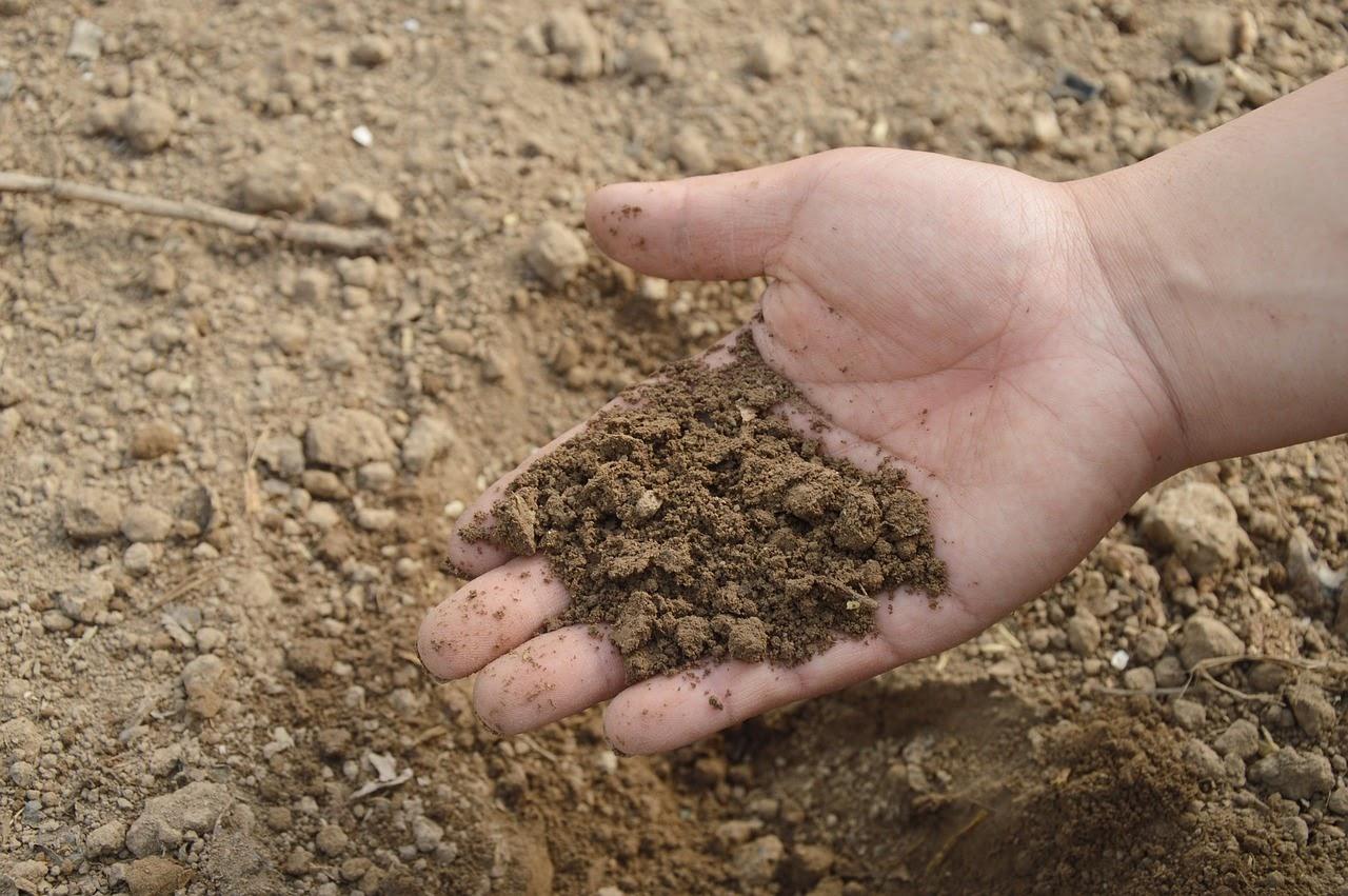 Organska ali mineralna gnojila